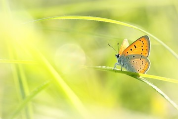Butterfly on a spring meadow in the sunshine