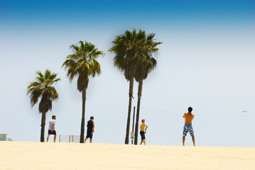 guys playing volleyball on venice beach, with palm trees