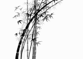 bambou 6