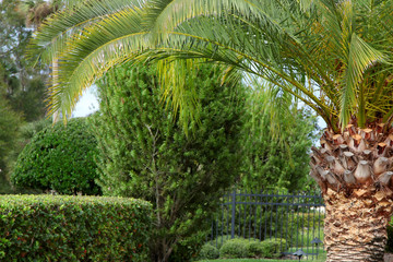 Lush green trees and Palm tree in a garden