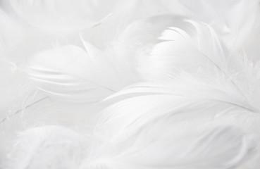 Obraz Weiße Federn - fototapety do salonu