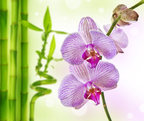 orchid and bamboo - spa background