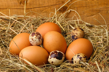 chicken and quail eggs in a nest on wooden background