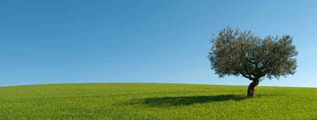 Panoramica Ulivo con la sua ombra