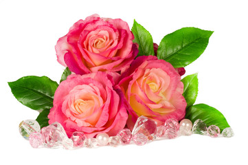Pink roses isolated on a white background