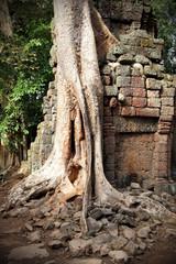 Ancient ruins of the Angkor