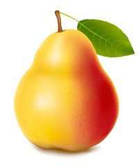 Fresh pear isolated on a white background. Vector.