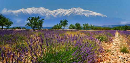 Fotobehang Lavendel lavande 5