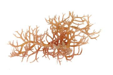 fresh bright brown seaweed