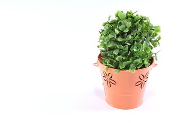 green plant in a beautiful cup