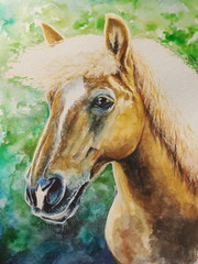 Haflinger horse watercolor painted