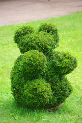 Beautifully manicured park plant.