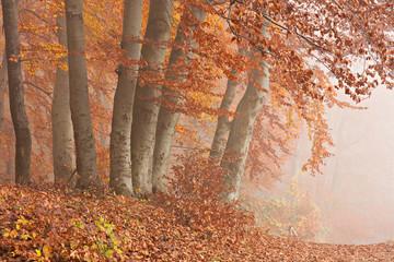 Herbstwald im Nebel, Nationalpark Jasmund auf Rügen