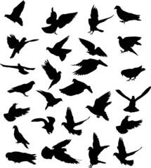 twenty six pigeon black silhouettes