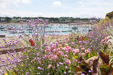 Coast Brittany covered with beautiful colorful flowers