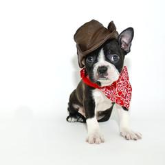 Cowboy Boston