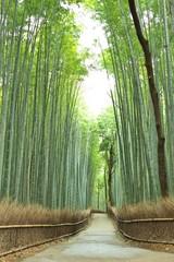 Poster Kyoto 竹林の道
