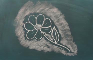 Blackboard with drawing flower closeup