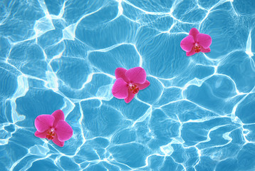 Three pink orchids floating on water in pool