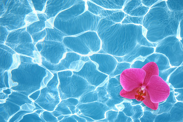 Pink orchid floating on water in pool