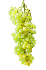 sprig of fresh green grapes