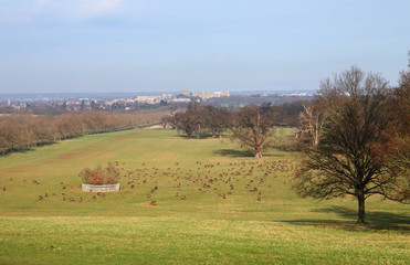 Fototapete - Windsor Great Park in Winter with Castle in the background