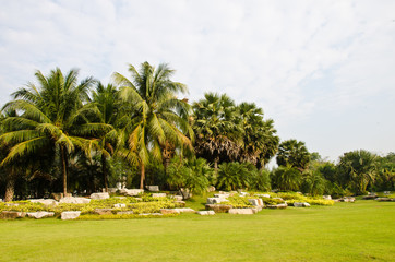 Palm species in the park.