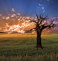 Large tree at sunset