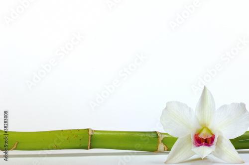 Orchidee Bambus Auf Weissem Hintergrund Stock Photo And Royalty Free