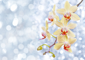 orchid and blue bokeh