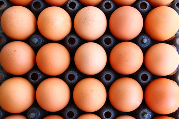 close - up of eggs in  container