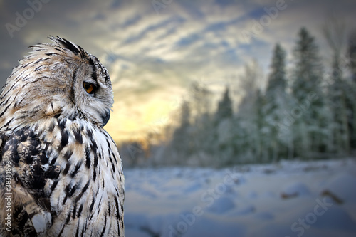 Fototapete owl on winter forest background