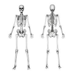 Skeleton Front & Back - Pencil Drawing Style - 3d render