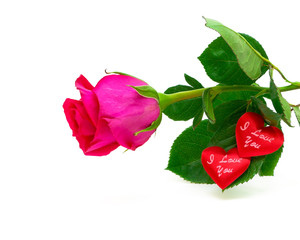 roses and valentines on a white background
