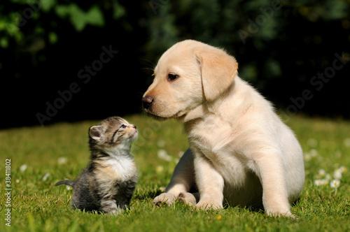 1ca696c0036 Hund und Katze