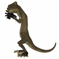 Salamander the Villain Plotting