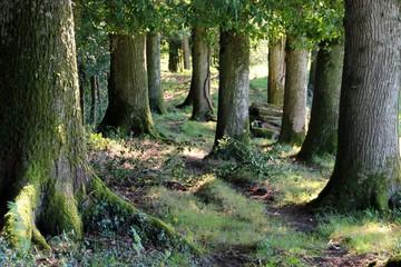 au pied des arbres.