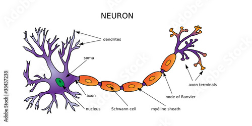Web art design neuron diagram neurone structure mdecine 20 stock web art design neuron diagram neurone structure mdecine 20 ccuart Images