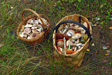 Two baskets of different mushrooms