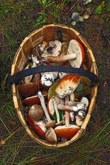 Basket of different mushrooms