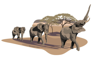 Elephants on Savannah