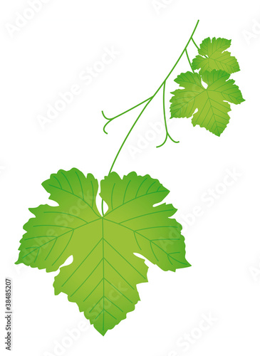 Feuille de vigne fichier vectoriel libre de droits sur la banque d 39 images image - Feuille de vigne dessin ...