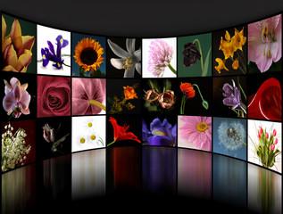 Kolekcja zdjęć kwiatów - kolaż
