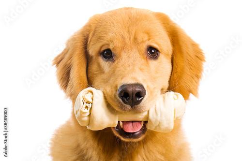 dog and bone