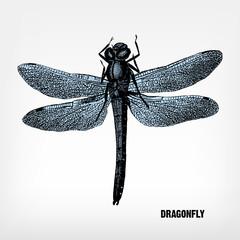 Engraving vintage dragonfly.