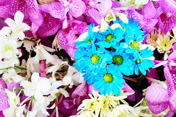 Mixed Flower Background