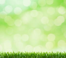abstract beautiful fresh grass