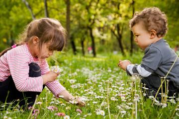 kids picking daisies park