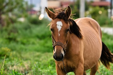 Closeup photo of a young horse against green background