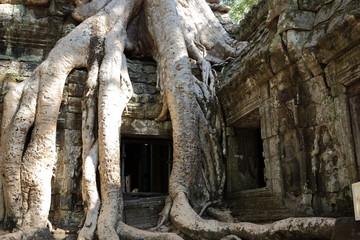 Temple envahi par un fromager au Ta Prohm